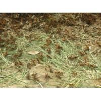 蚂蚱养殖合作社直销
