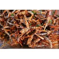 临沂蚂蚱养殖基地蚂蚱可做药