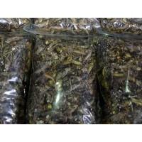 临沂蚂蚱养殖天烁养殖基地蚂蚱蝗虫蝗虫养殖蚂蚱养殖