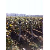临沂葡萄架丝生产厂家13954986698