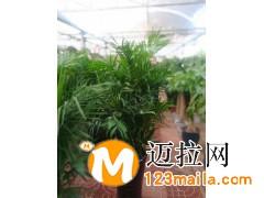 兰山区精品花卉价格13153928171