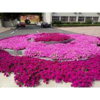 兰山区精品花卉电话13153928171