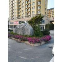 河东区精品花卉价格13153928171