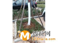河东区精品花卉电话13153928171