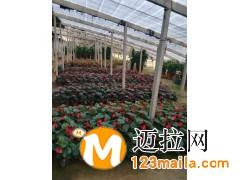山东精品花卉价格13153928171