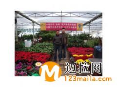 山东绿化用花电话13153928171