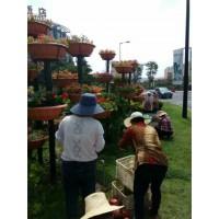 河东区会议与庆典用花电话13153928171
