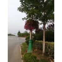 罗庄区屋顶绿化价格13153928171