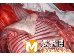 临沂牛副产品厂家13734384805
