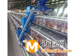 山东养殖上料机生产厂家15265953231