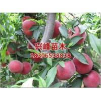 临沂5-8月红桃系直销电话18306538838