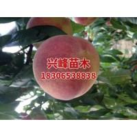 临沂5-8月红桃系价格电话18306538838