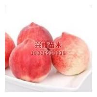 山东晚熟桃品种养殖基地电话18306538838