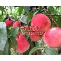 山东晚熟桃品种批发电话18306538838