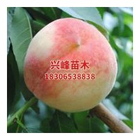 山东晚熟桃品种直销电话18306538838
