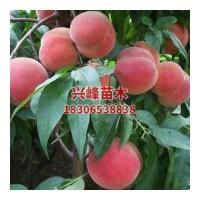 山东优质晚熟桃品种电话18306538838