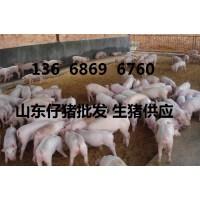 山东仔猪批发价格生猪供应基地