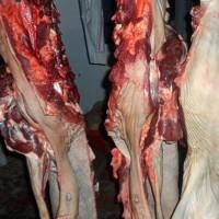 临沂驴肉批发,临沂驴肉厂家,临沂生鲜驴肉,临沂驴肉价格