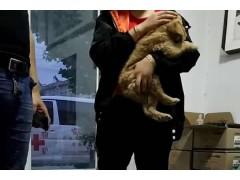 临沂宠物诊疗,临沂宠物美容,临沂宠物医院