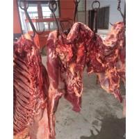 临沂鲜驴肉批发,山东鲜驴肉厂家直销